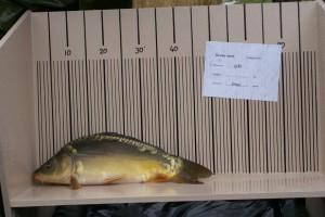 nr. 031 2400 gram 49 cm