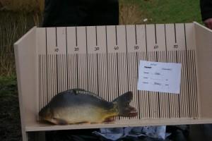 nr. 400 3500 gram 48 cm