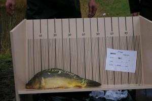 nr. 406 2400 gram 51 cm