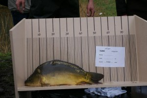 nr. 412 4100 gram 55,5 cm